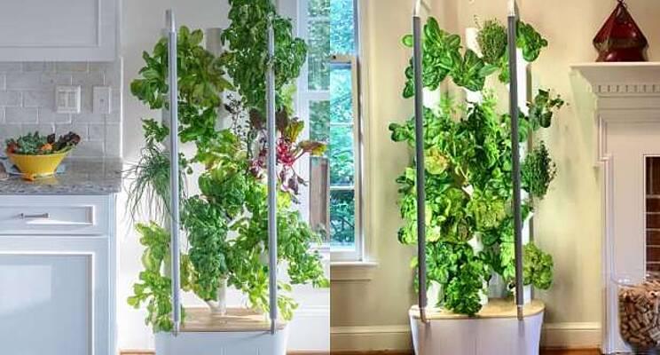 Easy Ways of Doing Indoor Gardening